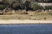 Rural scenery between Aswan and Luxor — Stock Photo