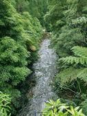 Small stream in dense vegetation — Stock Photo