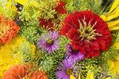 Costas floral colorida — Fotografia Stock