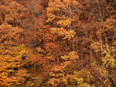 Abstract autumn back — Stock Photo