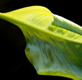 Abstract green leaf detail — Stock Photo