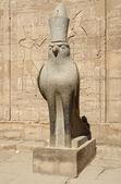 Horus statue at the Temple of Edfu in Egypt — Stock Photo