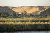 River Nile scenery at evening time — Stock Photo