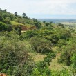 Stock Photo: Great Rift Valley in Uganda