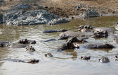 Hippos and sandy shore — Stock Photo