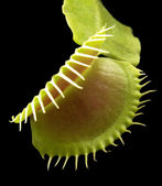 Carnivorous plant detail — Stock Photo