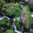 Overgrown Triberg Waterfalls detail — Stock Photo