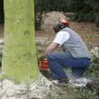 Lumberman at work — Stock Photo
