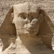Frontal Sphinx detail — Stock Photo