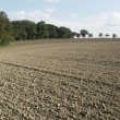 Pictoral plowed field and trees — Stock Photo