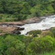 Whitewater at Murchison Falls in Africa — Stock Photo #7297863