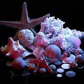 Zee leven regeling — Stockfoto