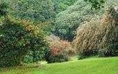 Vegetation in Uganda — Stock Photo