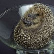Hedgehog in a glass bowl — Stock Photo #7314504