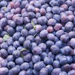 Stock Photo: Lots of plums