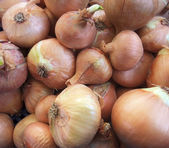 Full frame onions background — Stock Photo