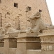 Sphinxes at Precinct of Amun-Re — Stock Photo #7327138