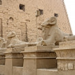 Sphinxes at Precinct of Amun-Re — Stock Photo