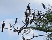 African birds on treetop — Stock Photo