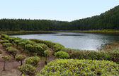 Waterside scenery at the Azores — Stock Photo
