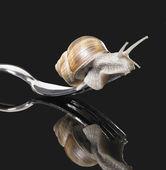 Grapevine snail on fork — Stock Photo