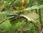 Plant detail in Uganda — Stock Photo