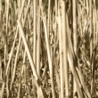 Stock Photo: Stalks