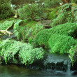 Various waterside vegetation — Stock Photo #7410295