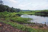 Near Rwenzori Mountains in Africa — Stock Photo