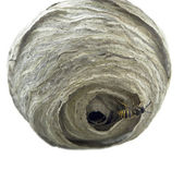 Wasp´s nest — Stock Photo