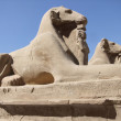 Sphinxes in sunny ambiance - Stock Photo