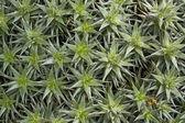 Succulent plants background — Stock Photo