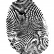 Perfect thumb fingerprint - Stock Photo