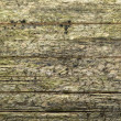 Weathered wood detail — Stock Photo