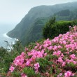 Misty coastal scenery at the Azores — Stockfoto