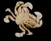 Undersidan av en moon krabba — Stockfoto