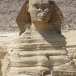 Portrait of Sphinx — Stock Photo #7548177