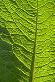 Soleado amarillo-verde hoja closeup — Foto de Stock