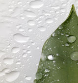Leaf and drops — Stock Photo