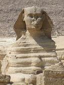 Portrait of the Sphinx — Stock Photo