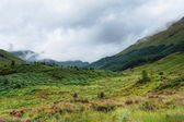 Clouded Glenfinnan scenery — Stock Photo