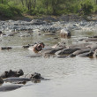 Stock Photo: Hippos in water