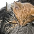 Snuggling kittens — Stock Photo