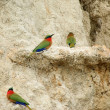 Colorful Bee-eaters on earth formation — Stock Photo