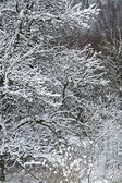 Snowy forest detail — Stock Photo