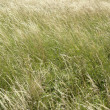 High grassland background - Stock Photo