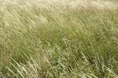 High grassland background — Stock Photo