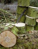 Woodworking scenery — Stock Photo