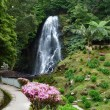 Stock Photo: Cascade at Azores