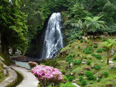 Cascade at the Azores — Stock Photo